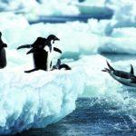 ファーストペンギンスピリットでレボリューション【教室開業・集客講座|横浜東京】